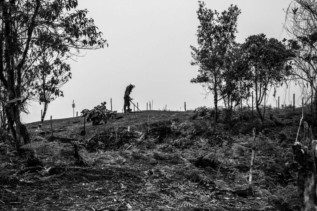 Desenterradores de la paz